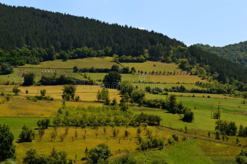 paisaje de huertas en la colina foto de archivo libre de regalías
