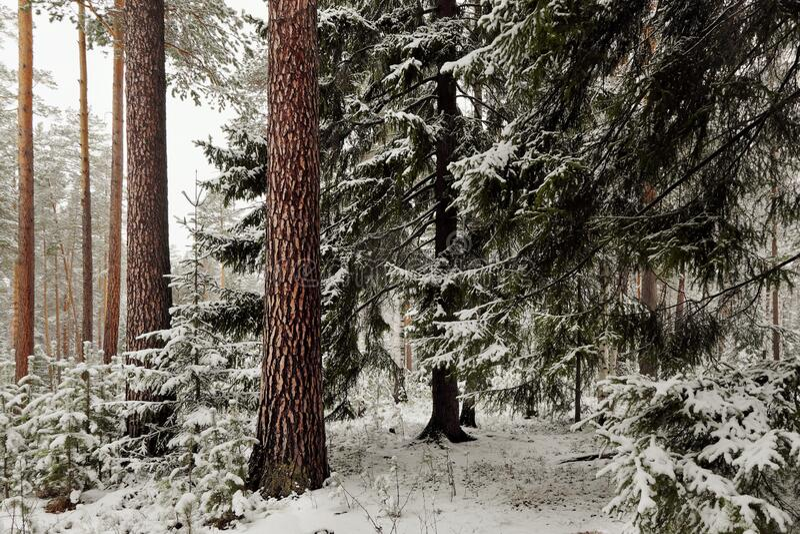 Paisaje de invierno nevado imagen de archivo libre de regalías