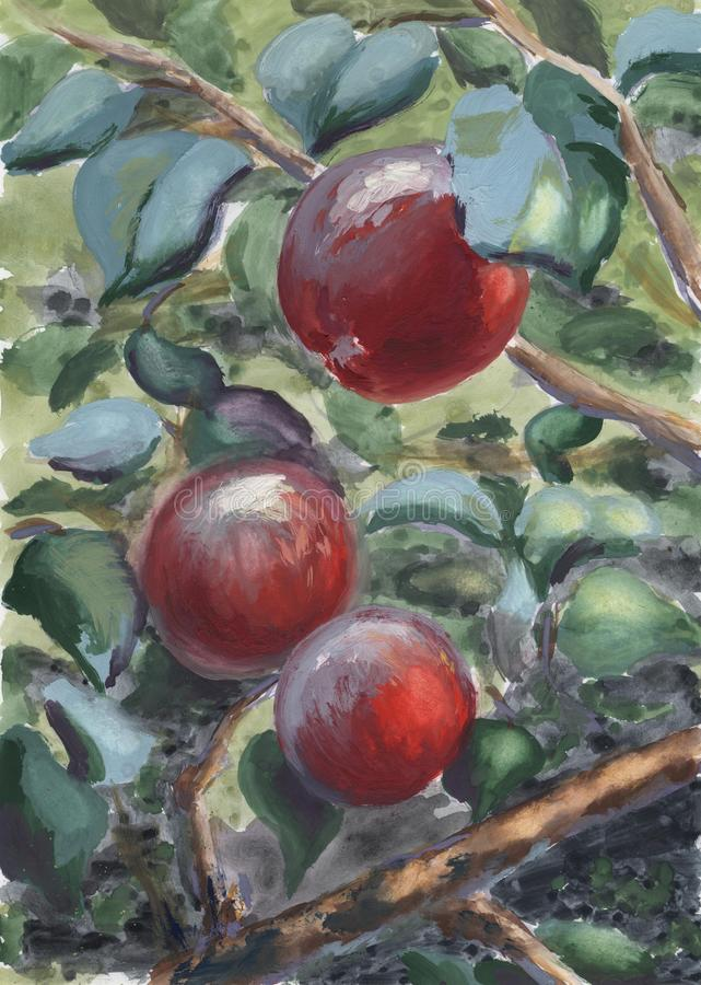 Paisaje de la acuarela Fruta madura hermosa jugosa en un árbol rodeado por el follaje verde libre illustration