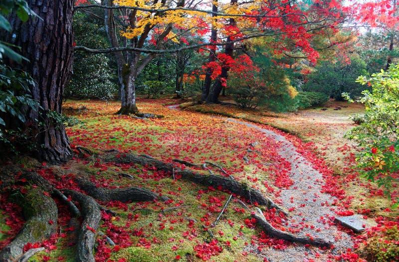 Paisaje de la caída del follaje colorido de los árboles de arce japonés y de las hojas caidas en un rastro en el jardín del chale foto de archivo