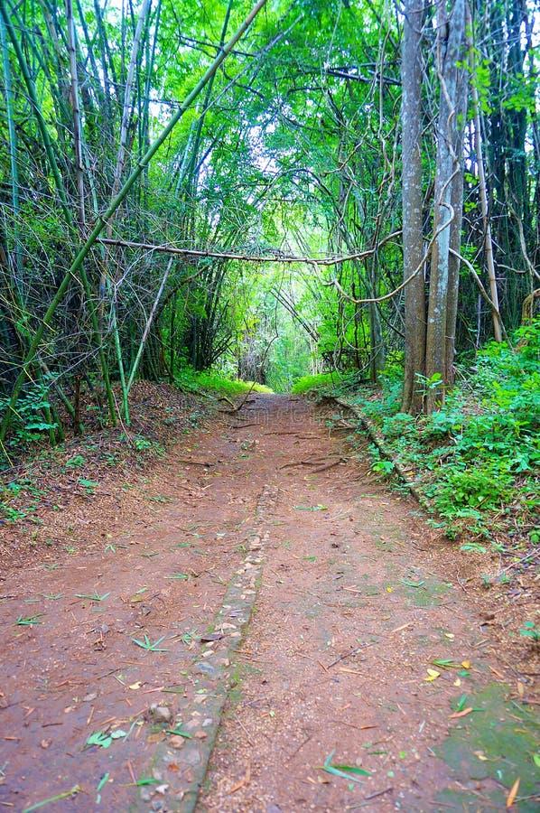 Paisaje de la calzada en un bosque de hojas caducas fotos de archivo libres de regalías