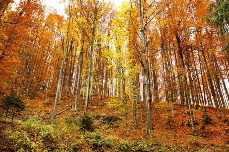 Paisaje de la colina del otoño foto de archivo
