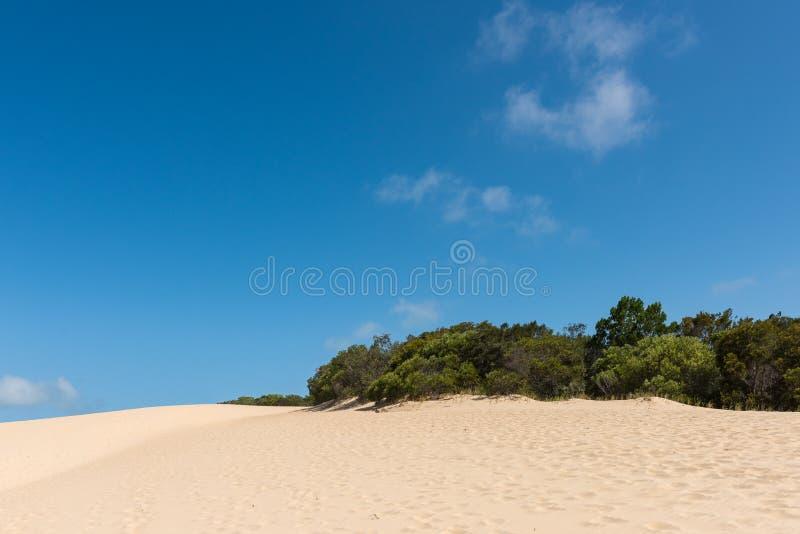 Paisaje de la duna de arena del desierto de Fraser Island en Australia fotografía de archivo