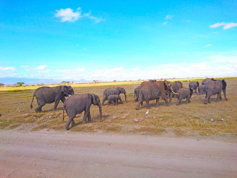 Paisaje de la fauna del elefante para los fondos foto de archivo
