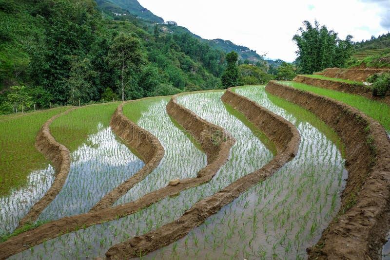Paisaje de la granja del arroz de la escalera en el veitnam fotografía de archivo