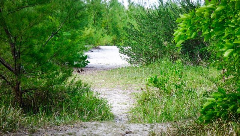 Paisaje de la isla verde con la playa blanca de la arena imagenes de archivo