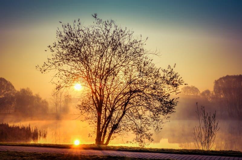 Paisaje de la mañana de la primavera en la salida del sol fotografía de archivo