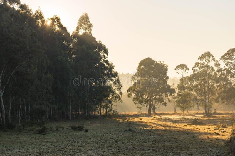 Paisaje de la mañana del invierno en el Brasil meridional 16 foto de archivo