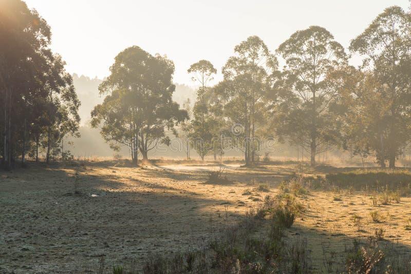 Paisaje de la mañana del invierno en el Brasil meridional 19 imagenes de archivo