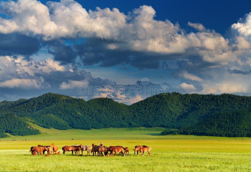 Paisaje de la montaña con el pasto de caballos foto de archivo libre de regalías