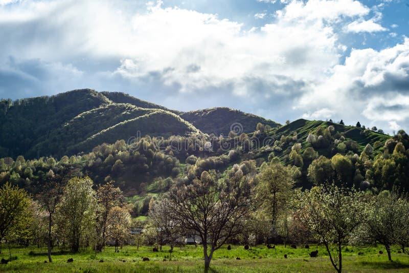 Paisaje de la montaña con la hierba verde, las colinas y los árboles, cielo nublado imagen de archivo libre de regalías