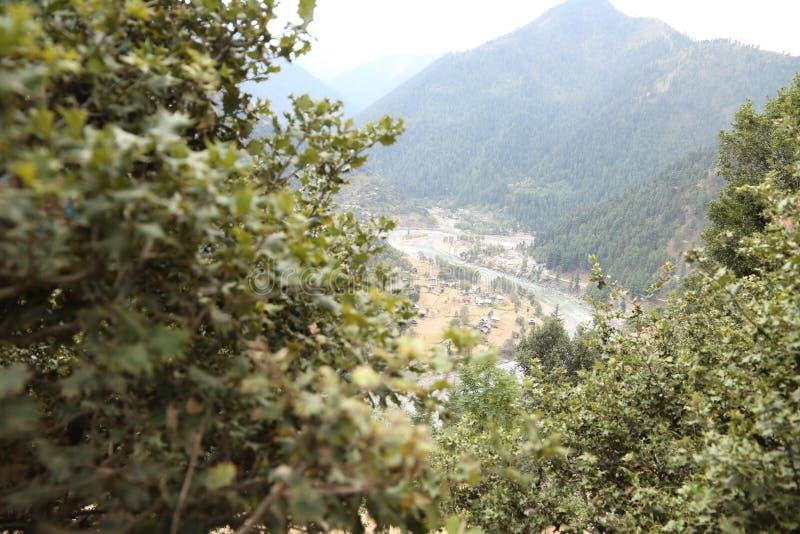 Paisaje de la montaña con las flores en el área de Cachemira fotografía de archivo