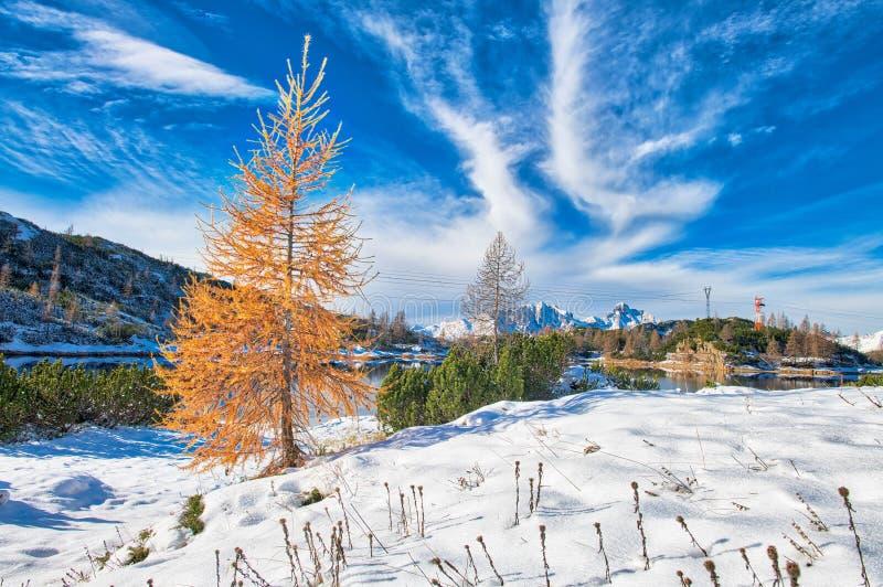 Paisaje de la montaña con otros colores del otoño y la primera nieve foto de archivo