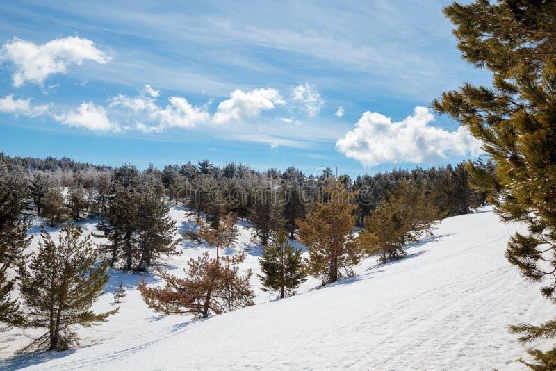 Paisaje de la montaña del invierno con la nube del cielo del árbol de pino de la nieve imagenes de archivo