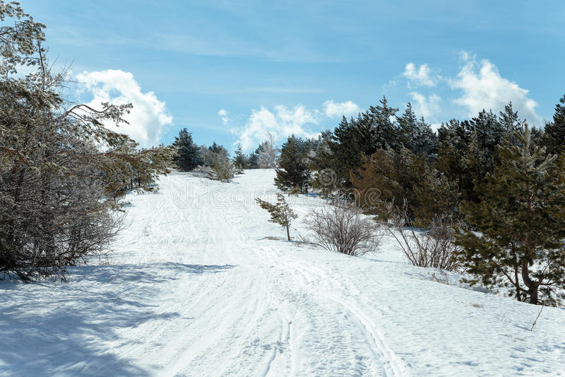 Paisaje de la montaña del invierno con la nube del cielo del árbol de pino de la nieve foto de archivo