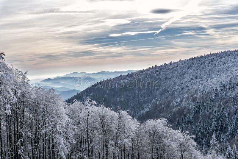 Paisaje de la montaña del invierno con los árboles cubiertos con la helada blanca foto de archivo