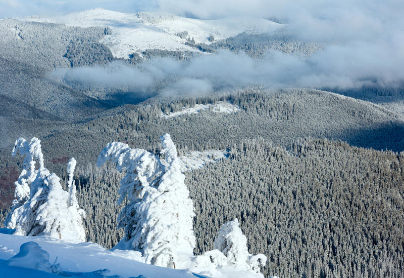 Paisaje de la montaña del invierno con los árboles nevosos foto de archivo