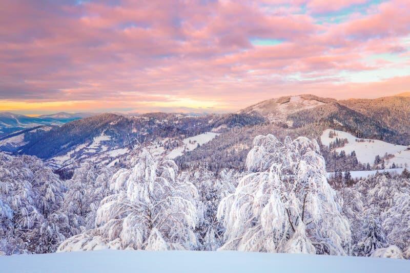 Paisaje de la montaña del invierno Salida del sol del invierno con el cielo rosado rojo vivo fotos de archivo