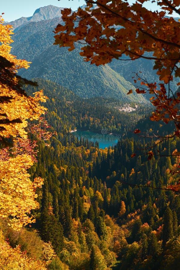 Paisaje de la montaña del otoño con los árboles amarillos, anaranjados y rojos del follaje y los pinos verdes Pequeña opinión del fotos de archivo libres de regalías