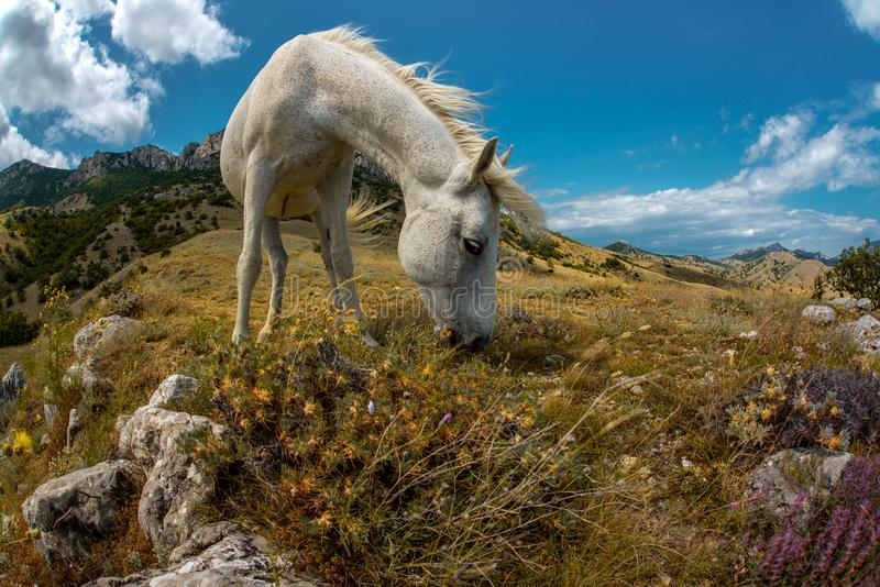 Paisaje de la montaña de la naturaleza de la belleza con el caballo blanco fotos de archivo libres de regalías