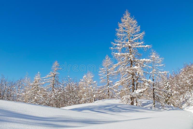 Paisaje de la montaña Nevado con Julian Alps imagen de archivo libre de regalías