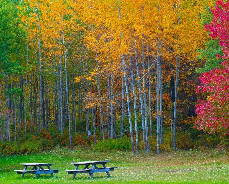 Paisaje de la naturaleza, árboles que cambian colores imagenes de archivo