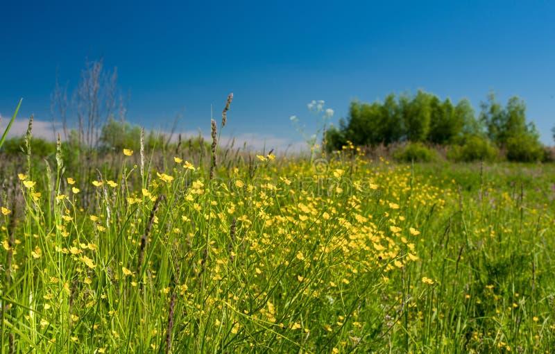 Paisaje de la naturaleza con las flores fotografía de archivo