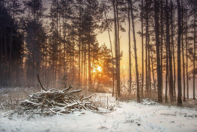 Paisaje de la naturaleza del invierno del bosque nevoso en luz del sol caliente Bosque escarchado vivo por mañana imagen de archivo