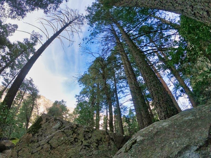 Paisaje de la naturaleza en el parque nacional de yosemite imagen de archivo libre de regalías