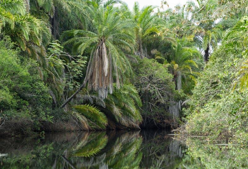 Paisaje de la naturaleza en el río fotografía de archivo libre de regalías