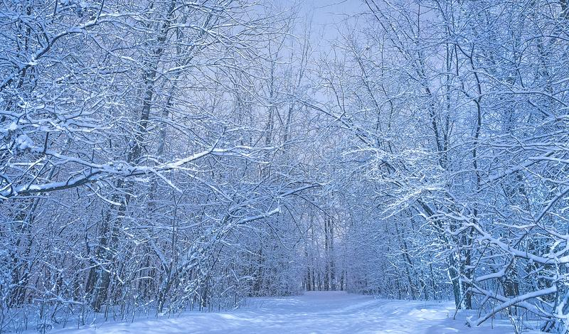Paisaje de la naturaleza de maderas en el día frío imágenes de archivo libres de regalías