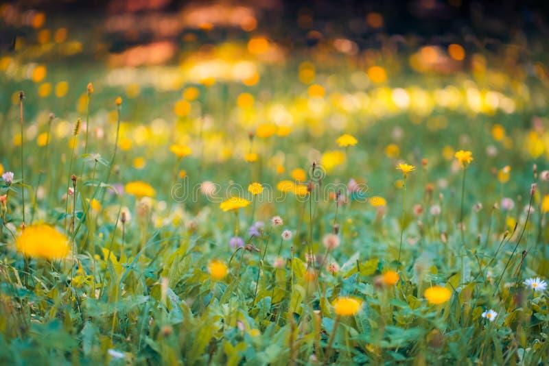 Paisaje de la naturaleza de la primavera del primer Prado colorido bajo luz del sol en fondo del verano fotos de archivo