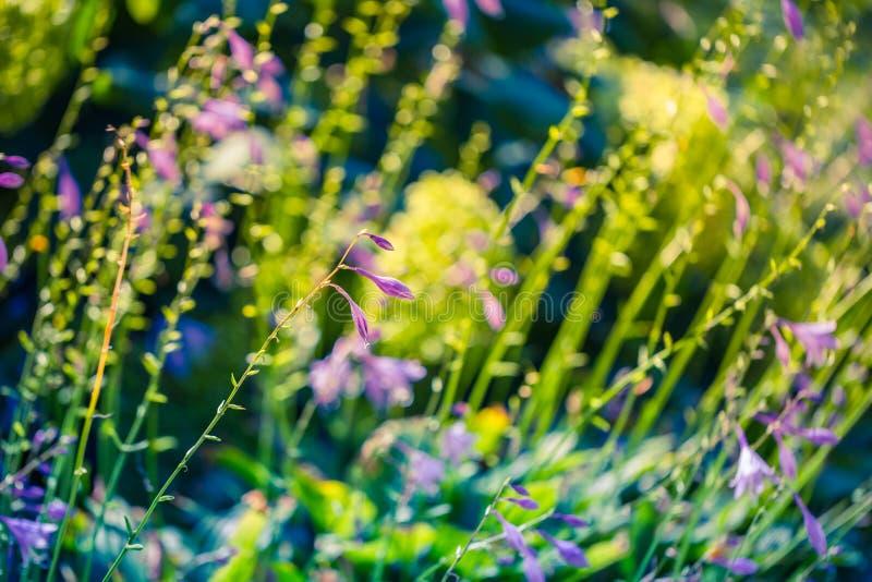 Paisaje de la naturaleza de la primavera del primer Prado colorido bajo luz del sol en fondo del verano foto de archivo