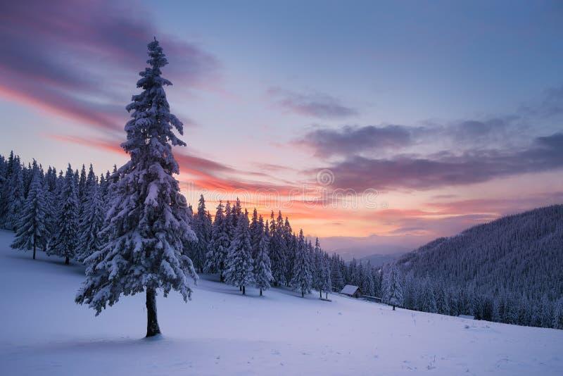 Paisaje de la Navidad con el árbol de abeto en la nieve y la casa en el m imágenes de archivo libres de regalías