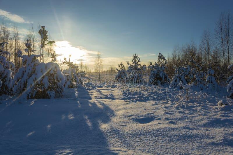 Paisaje de la nieve del invierno en los rayos del día del sol poniente en diciembre imagen de archivo