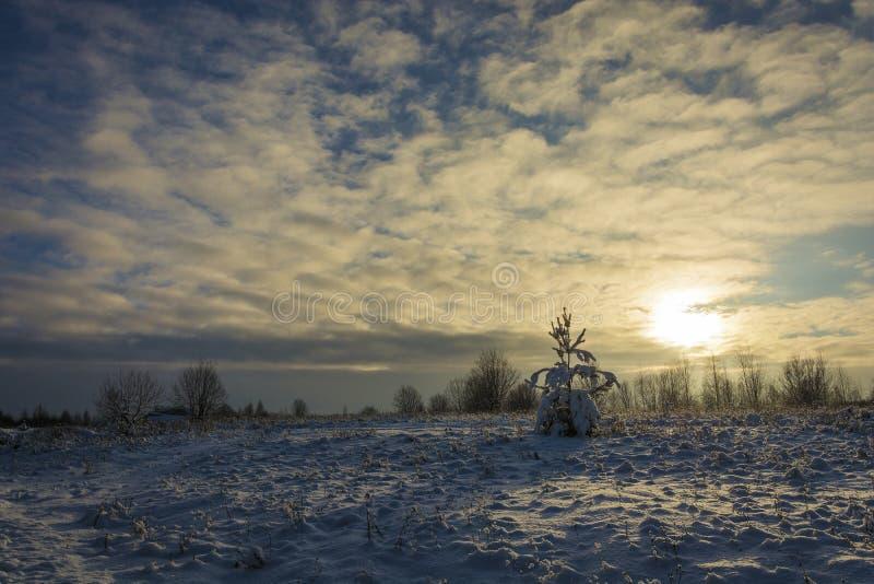 Paisaje de la nieve del invierno en los rayos del día del sol poniente en diciembre foto de archivo