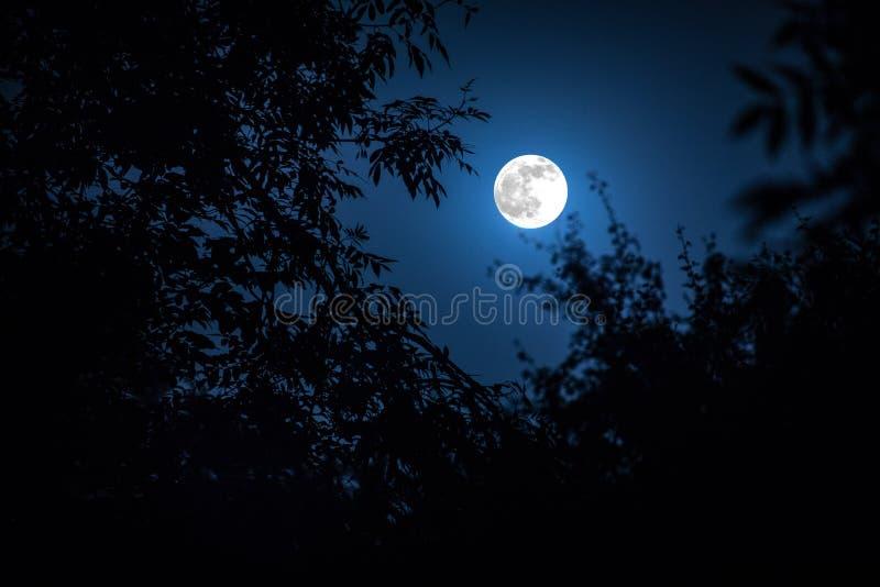 Paisaje de la noche del cielo y de la luna estupenda con claro de luna brillante detrás de la silueta de la rama de árbol Fondo d fotografía de archivo libre de regalías