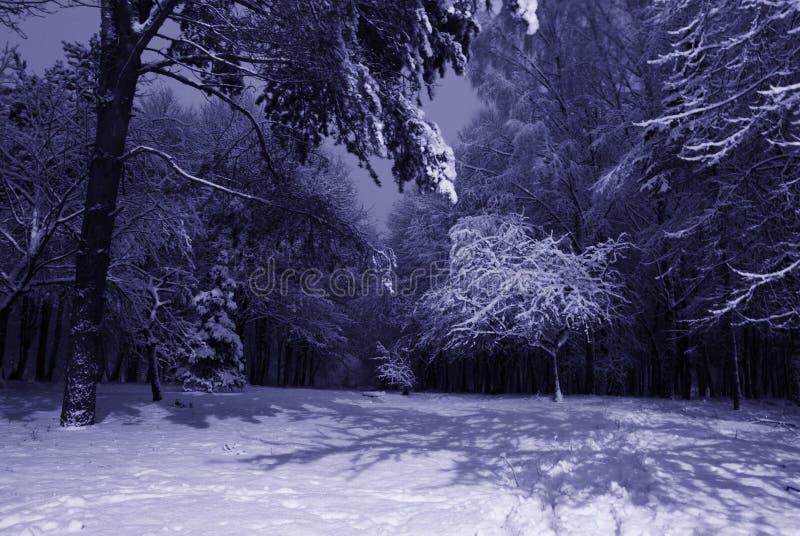 Paisaje de la noche del invierno fotografía de archivo libre de regalías
