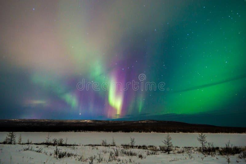 Paisaje de la noche del invierno con el bosque, el camino y la luz polar sobre los árboles fotografía de archivo