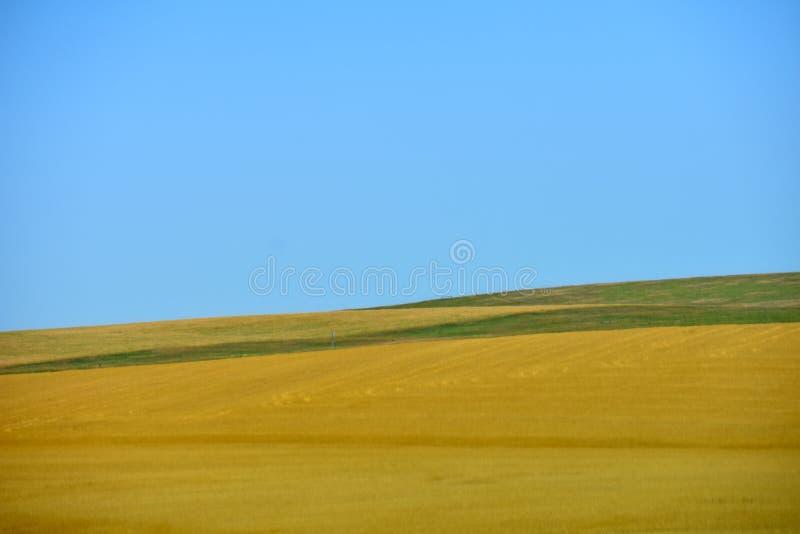 Paisaje de la pradera con las hierbas amarillas y el cielo azul imagen de archivo libre de regalías