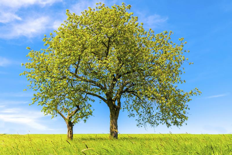 Paisaje de la primavera, árboles y cielo azul imagen de archivo libre de regalías