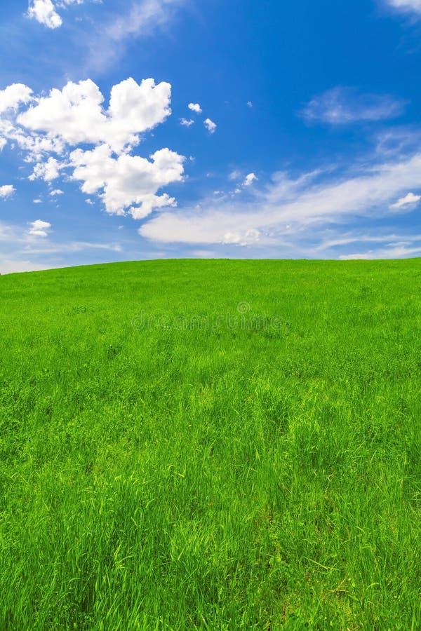 Paisaje de la primavera, campo y cielo azul fotos de archivo