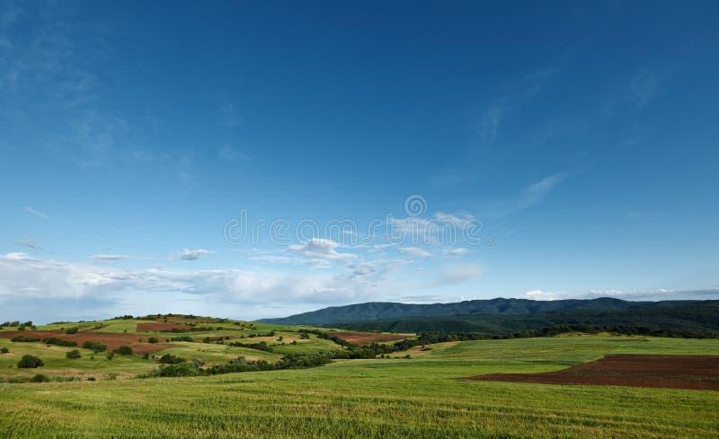 Paisaje de la primavera con el cielo azul fotografía de archivo libre de regalías