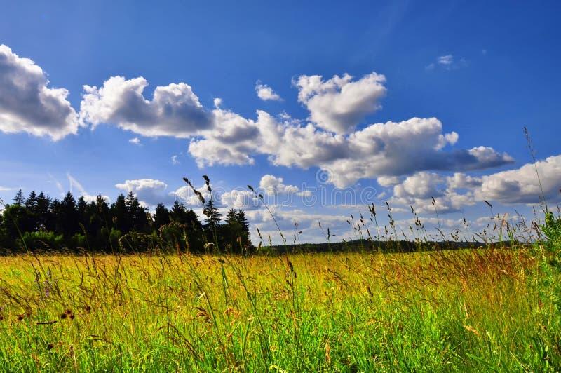 Paisaje de la primavera con el prado verde fotografía de archivo libre de regalías
