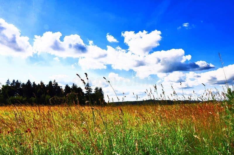 Paisaje de la primavera con el prado verde imagen de archivo