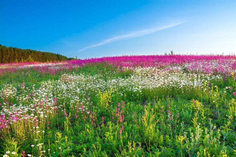 Paisaje de la primavera con las flores en un prado foto de archivo
