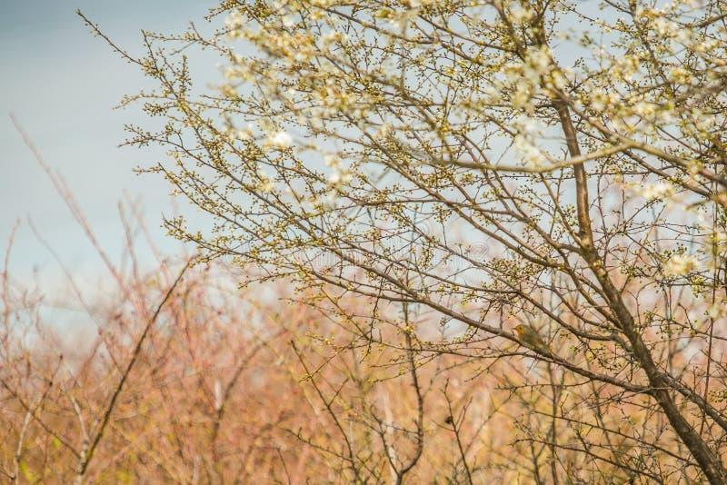 Paisaje de la primavera con un árbol y un pájaro fotos de archivo libres de regalías