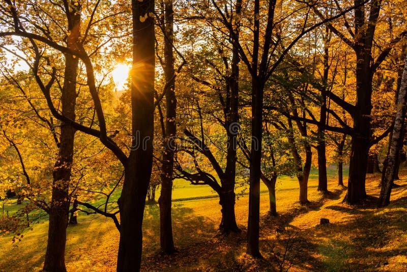 Paisaje de la primavera del bosque - árboles forestales con la hierba en el primero plano y la luz del sol que brillan a través d foto de archivo libre de regalías