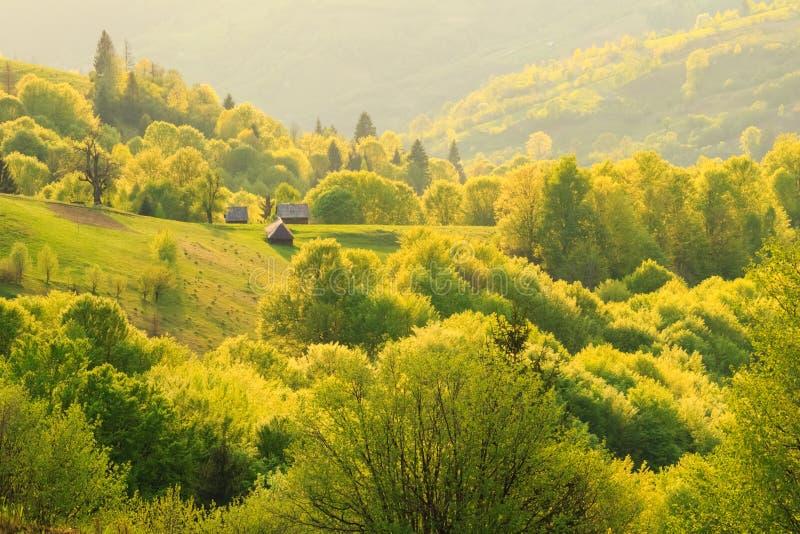 Paisaje de la primavera en las montañas cárpatas fotografía de archivo libre de regalías