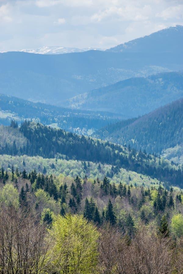 Paisaje de la primavera de montañas cárpatas foto de archivo